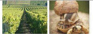 vigneron, vigne, beunaise, vente directe, producteur